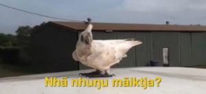 Yolngu Culture - Malk